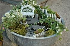 Fairy Gardens, They Aren't Just for Little Old Ladies
