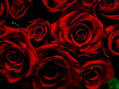 Dark Red Roses by hpaich, via Flickr