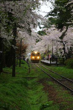 BY SLEEPGATE. Japan cherry blossom ride...