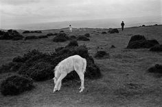 David Hurn |  GB. WALES. Black Mountains. A Black Mountain wild pony and young tourists brave the elements at this traditionally windy spot. Wild ponies are still a feature of many of the mountain areas of Wales. 1974.
