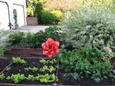 MEREDITH'S RAISED GARDEN FROM THE SPRING OF 2013 !!!