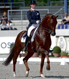 Dutch Warmblood chestnut stallion dressage horse and sire Dutch Warmblood, Warmblood Horses, Dressage Horses, Hunter Jumper, Horse Love, Horse Girl, Kwpn Horse, Grand Prix, Horse Riding Tips