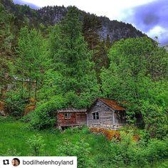 Nå er det grønt overalt. God natta alle sammen. #reiseliv #reisetips #reiseblogger #reiseråd  #Repost @bodilhelenhoyland (@get_repost)