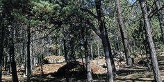 Reserva de la biosferra La Michilia en Durango Dgo. MEXICO donde se oreserva la flira y la fauna de dicho estado.