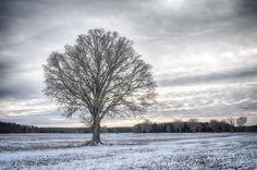 Winter is here! #landscape_lovers #landscape_captures #landscapephotography #landscapelovers #meralink #linköping #linköpinglive #lkpg #nordic #igscandinavia #scandinavia #scandinavian #bestofscandinavia #bestoftheday #sweden #photolovers #igsweden #ig_nature #igaddicts #naturephotography #tree #vinter