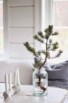 centro de mesa navideño con un pino vivo