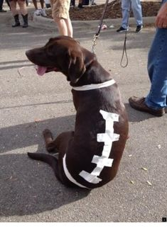 One fan dressed up his or her chocolate lab with a football doggy costume for the Florida State Seminoles' home showdown against the Miami Hurricanes. Puppy Halloween Costumes, Pet Costumes, Costume Ideas, Dog Football Costume, American Bulldog Puppies, Cute Dog Photos, Brown Dog, Cute Dogs, Funny Dogs