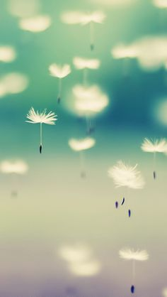 Great site for iphone wallpapers | Dandelions In The Air #iPhoneWallpaper