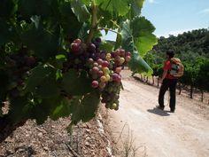 Walking among vineyards in the Priorat wine region, southern Catalonia