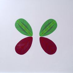 Collection_Butterfly