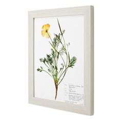Look what I found at UncommonGoods: poppy pressed botanical print... for $98 #uncommongoods