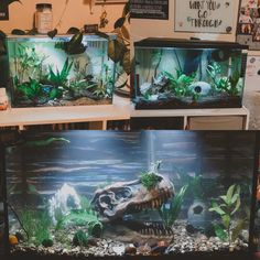 All three of my boy's tanks! Top left is Zuko's, top right is Raptor's and bottom is Sparrow's! The post Betta Fish: All three of my boy's tanks! Top left is Zuko's, top right is Raptor's and bottom is Sparrow's! appeared first on Flake Food. Betta Tank, Betta Fish, Fish Tanks, Aquarium Fish Tank, Leopard Gecko Setup, Fish Tank Themes, Fish Tank Terrarium, Goldfish Tank, Fish Room