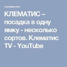 КЛЕМАТИС – посадка в одну ямку - несколько сортов. Клематис TV - YouTube