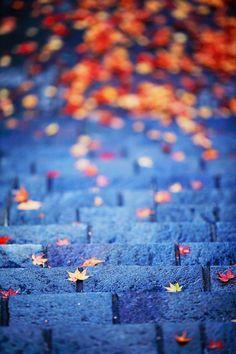 #autumn #leaves