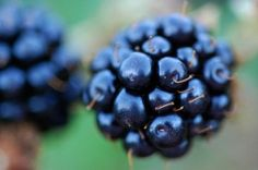 Tips on growing blackberries successfully.  I am going to plant Blackberries this year