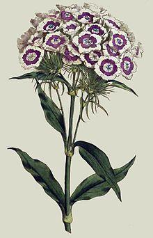 Curtis's Botanical Magazine - Wikipedia, the free encyclopedia