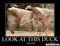 Look at this duck!