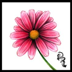 Derrick the Artist: How to Color a Daisy With Colored Pencils by Derrick Rathgeber
