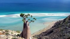 Socotra, an island 380 kilometres south of Yemen, is considered the jewel of biodiversity in the Arabian Sea. One of the most isolated landforms on Earth, the island is home to the endemic Dragon Blood Tree - which is found no where else in the world. Amazing Places On Earth, Beautiful Places, Voyager Loin, Arabian Sea, Paradise Found, Desert Island, World Heritage Sites, Santorini, Cool Places To Visit