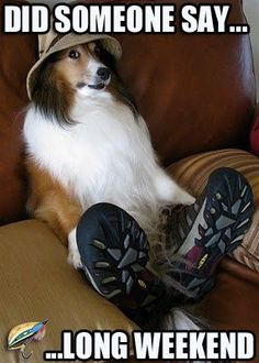 Sheltie Sunday, Shetland Sheepdogs Halloween Edition Photos) Welcome to the spooky halloween edition. Hope you have a very Sheltie Halloween. Baby Animals, Funny Animals, Cute Animals, Wild Animals, I Love Dogs, Cute Dogs, Animal Pictures, Funny Pictures, Hilarious Photos