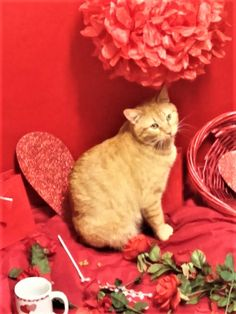 The Independent Cat Society's 2017 Sweetheart Contest is on and Stubbs is a contestant! He is such a wonderful boy-he deserves your vote for Sweetheart of the year! The contest runs until March 5th, 2017. $1 equals one vote. Make sure that you type STUBBS FOR SWEETHEART in your donation! Vote though the ICS websites donate button using paypal or through the donate button on their fb page. If donating by check, please mail to ICS 2017 Sweetheart Contest, P.O. Box 735, Westville, IN 46391, be…