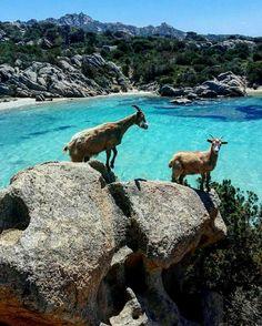 Isola di Caprera -Sardinia/Cerdeña/Sardegna/Sardinien