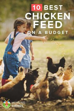 The main reason people want to raise chicken is to save money, but you can save even more money with these low-cost high-nutrients chicken feed