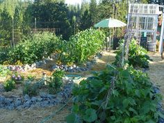 part of our garden
