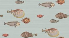 Acquario (97/10030) - Cole & Son Wallpapers - A delightful whimsical design with vividly detailed clownish fish set on soft washed backgrounds.  Shown here in soft aqua colour.  Other colours available. Wide width. Paste the wall. Please request sample for true colour match.