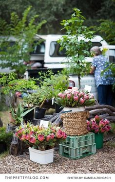 Head over to the Wild Oats Community Market in Sedgefield for a fun, fresh local experience!