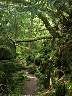 Puzzlewood stretches over fourteen acres of the Forest of Dean in the English county of Gloucestershire, and was Tolkien's inspiration for Middle-Earth.