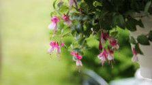Kávovou usadeninou hnojíme rastlinky podľa ich druhu