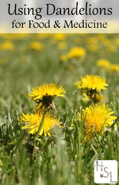 Make the most of common 'weeds' by foraging and using dandelions for food and medicine with these easy recipes and home remedies.