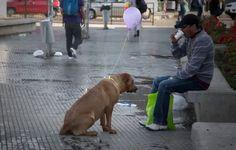 Cachorros invisíveis vistos pela primeira vez.