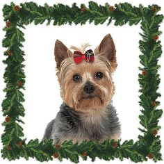 Holiday Tartan Dog Hair Bows for Small Dogs