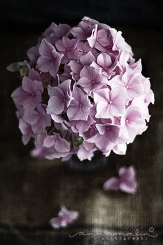flowers #floral #blooms #lilac