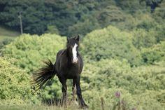 #Horse #Photo