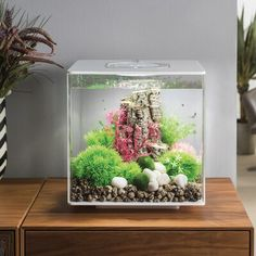 biOrb LED Square Aquarium Tank Color: Black, Size: H x W x D - fresh water fish tank Aquarium Kit, Home Aquarium, Tropical Aquarium, Aquarium Fish Tank, Aquarium Ideas, Fish Tank Decor, Biorb Fish Tank, Aquarium Design, Cubes