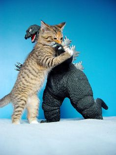 Godzilla finally meets his match in an epic battle. Once Godzilla fell over, the Giant kitten walked away, now bored. Cool Cats, I Love Cats, Funny Cats, Funny Animals, Cute Animals, Crazy Cat Lady, Crazy Cats, Photo Chat, Godzilla Vs