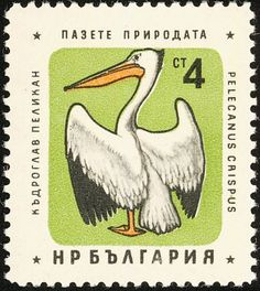 Dalmatian Pelican stamps - mainly images - gallery format