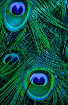 peacock emerald                                                                                                                                                     More