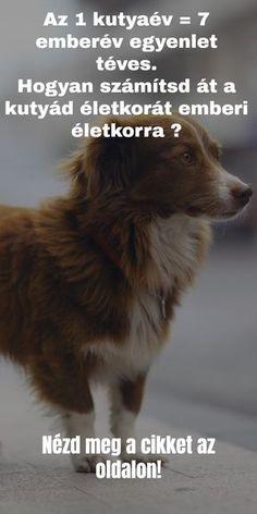 Az 1 kutyaév 7 emberév téves, hogyan számolhatod ki a kutyád pontos évét? German Wirehaired Pointer, Digital Painting Tutorials, Cross Stitch Borders, Disney Scrapbook, Animals And Pets, Photography Tips, Cats, Animales, Animals