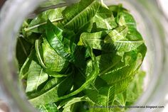 La Piccola Casa: I liquori preparati in casa: Liquore all'erba Luigia (Luisa o Cedrina o Lemoncina)