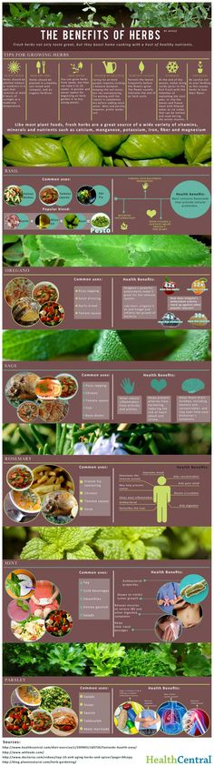 The benefits of herbs health herbs infographic health tips infographics health infographics tips on being healthy infographic on health food infographic Health And Nutrition, Health And Wellness, Health Tips, Health And Beauty, Natural Medicine, Herbal Medicine, Herbal Remedies, Natural Remedies, Medicinal Plants