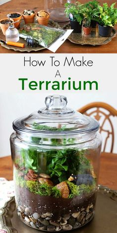 by step instructions for how to make a terrarium. Including the best t. Easy step by step instructions for how to make a terrarium. Including the best t. Easy step by step instructions for how to make a terrarium. Including the best t. Terrarium Supplies, Terrarium Containers, Container Plants, Container Gardening, Succulent Containers, Container Flowers, Best Terrarium Plants, Mini Terrarium, How To Make Terrariums
