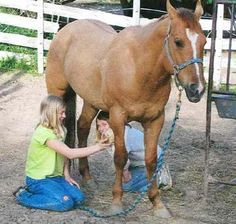 Horseman Tips - Think Like a Horse ® - almost 200 practical tips on how to handle, train, ride, and care for a horse! This is my most popular horse-related pin, and for good reason.