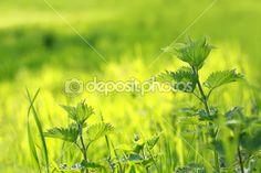 Nettles in the afternoon park — Stock Photo © Julietart #10865395