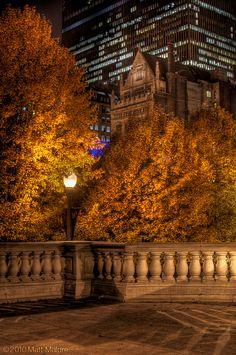 Autumn orange leaves in Millenium Park  Chicago IL via flickr