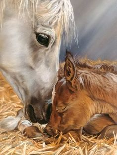 The Gift. Spirit of Horse Art. So innocent and sweet. Pretty Horses, Horse Love, Beautiful Horses, Horse Drawings, Art Drawings, Horse Artwork, Baby Horses, Tier Fotos, Equine Art