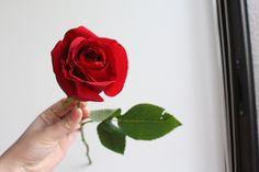 Um rosa do buquê de 2 anos de namorismos :3